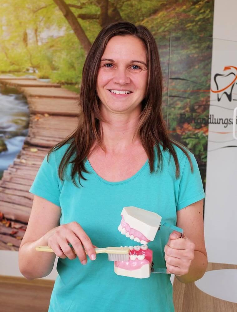 Zahnarzthelferin mit Gebiss in der Zahnarztpraxis in Rudolstadt
